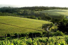 Green-Mountain-Walk-Vineyards-1