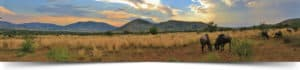 Pilanesberg-National-Park, bushveld game walk