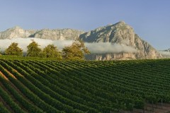 phoca_thumb_l_delaire-graff-estate-chardonnay-vineyards-v01